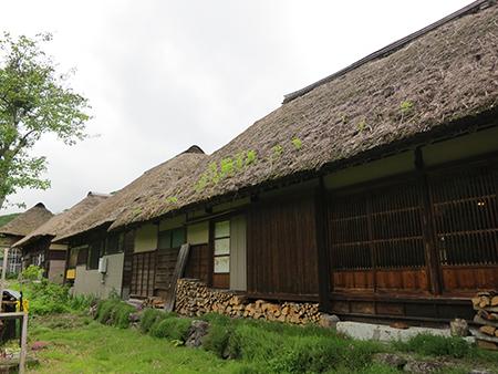 201206mizuhiki2.JPG