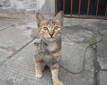 chinacat.jpg