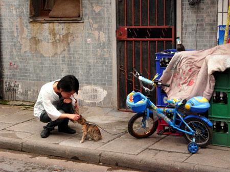 chinacat_kaya.jpg